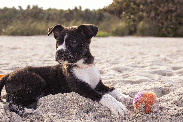Hund apportiert den Ball